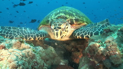 Close up turtle