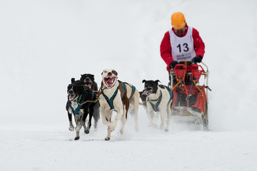 Sleddog speed racing.