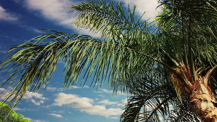 Clouds over a palm tree. TimeLapse.
