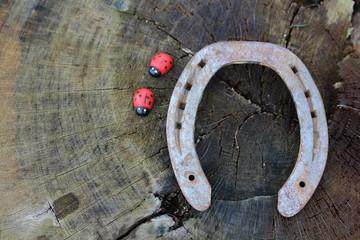 Marienkäfer und Hufeisen auf einem Baumstamm