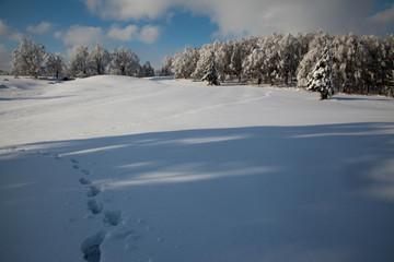 Orme sulla neve fresca