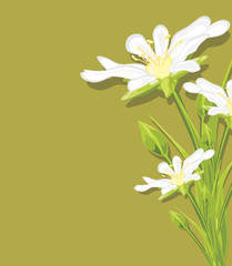 White spring flowers on a green background