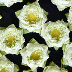 Close up white lotus flowers