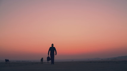 Dogs and silhouette of a man on the road against the background