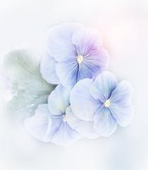 Violets Flowers Watercolor