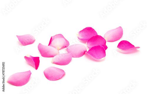 Zdjęcia na płótnie, fototapety, obrazy : Petals of roses