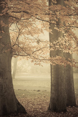 Trees in autumn park foggy day