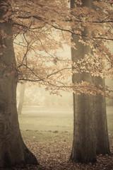 Trees in autumn park foggy day
