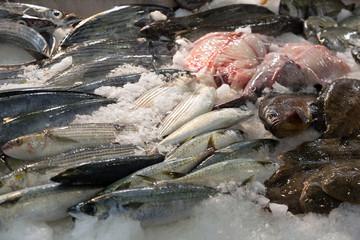 fish on mediterranean market counter