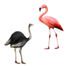ostrich, flamingo isolated on white background