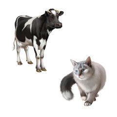 Gray Cat hunting, Standing cow isolated on white background