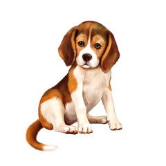 beagle puppy siting over white background