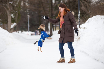 Yorkshire terrier in overalls jumps for snow in  hands of girl