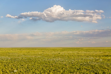 Pawnee National Grassland in springtime