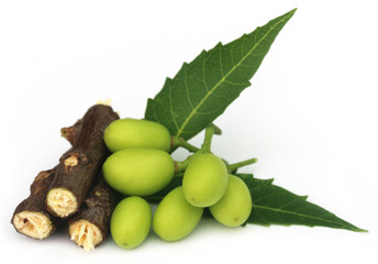 Medicinal neem fruits with twigs