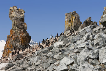 Antarctica chinstrap penguin colony