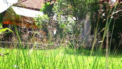 Flower grass under sunshine near house. Video shift