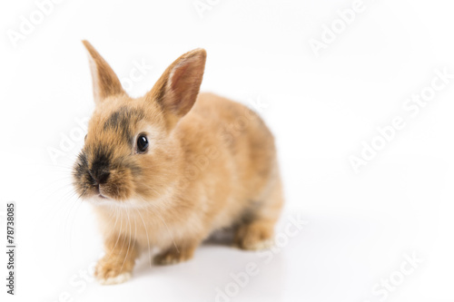 Staande foto Kip Easter bunny on white background isolated