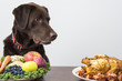Dog with vegan and meat food - 78738674