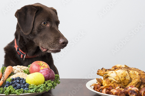 Fotobehang Hond Dog with vegan and meat food