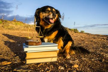 One intelligent Black Dog Reading a Book