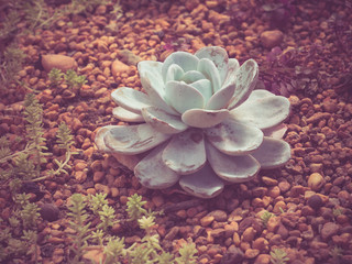cactus with filter effect retro vintage style
