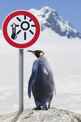 Antarctica King penguin with road sign Global warming