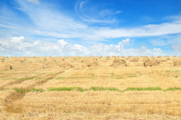 Field with Stacks of straw and blue sky