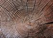 Jahresringe im Holz - growth rings