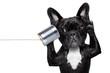 dog phone telpehone