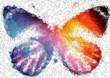 Psst... Das ist die Welt der Schmetterlinge