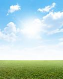 Plain Grass And Blue Sky