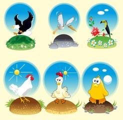 Poultry animal unique