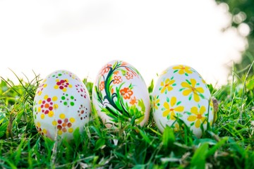 Row of Easter Eggs with Daisy on Fresh Green Grass