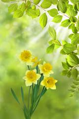 Frühling 328
