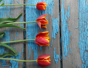red and yellow tulips on old wooden background