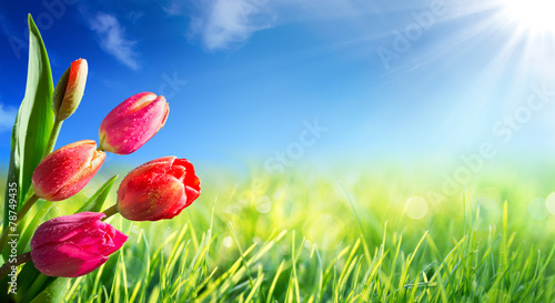 Foto op Canvas Bloemen Spring and easter background with tulips in sunny meadow