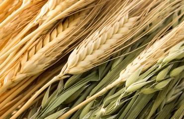 Getreidesorten: Weizen, Gerste, Hafer natur