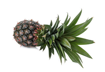 Pineapple bulb isolated on white background