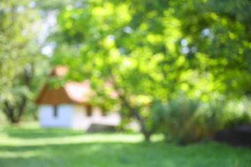 Dom wśród drzew