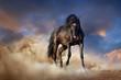 Leinwanddruck Bild - Beautiful black stallion run in desert dust against sunset sky