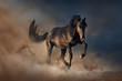 Obrazy na płótnie, fototapety, zdjęcia, fotoobrazy drukowane : Beautiful black stallion run in desert dust against sunset sky
