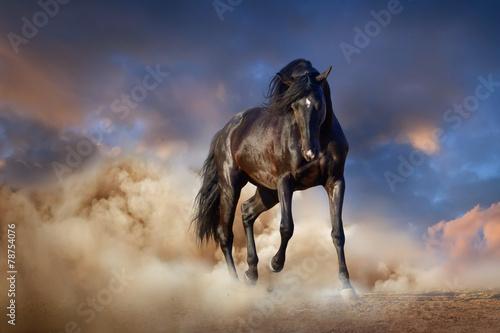 Leinwanddruck Bild Beautiful black stallion run in desert dust against sunset sky