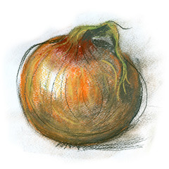 onions on a white background. pastel