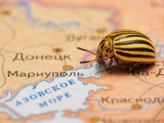 Colorado bug, the symbol of separatism in Ukraine near Mariupol