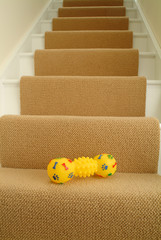 Dog toy on stairs