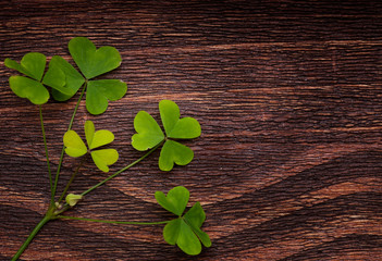 Five lucky shamrocks on a old wood vintage background