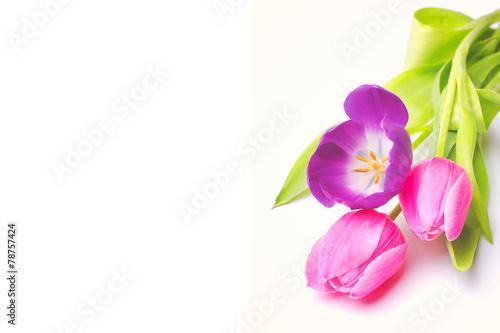 Zdjęcia na płótnie, fototapety, obrazy : Tulpen auf weißem Hintergrund