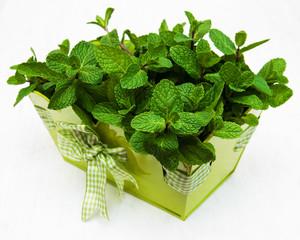 Mint in a metal pot