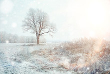 """Постер, картина, фотообои """"white wood covered with frost frosty landscape"""""""
